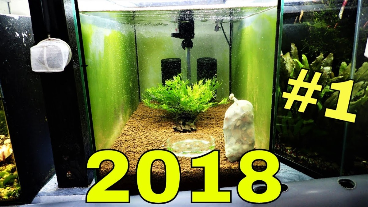 how to setup a successful bee shrimp tank marksshrimptanks com