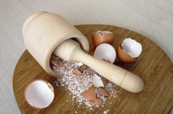 Egg Shell for shrimp