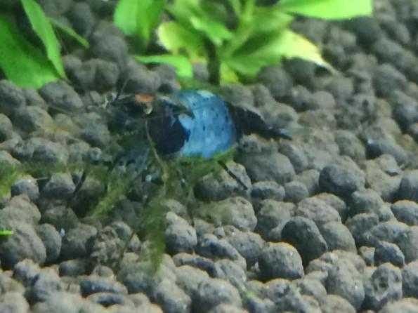 Aqua Maline 5